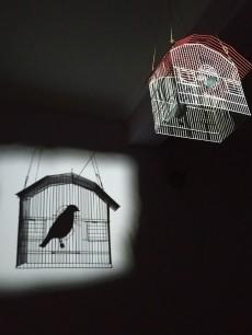 A Bird - Ένα Πουλί